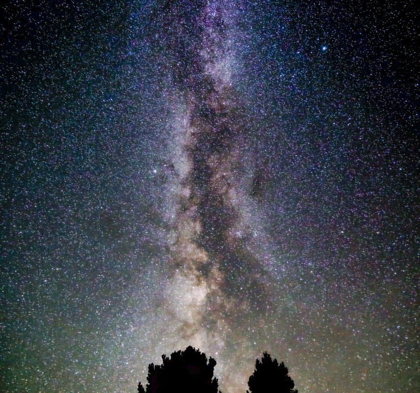 Milky Way + Tree Tops (V)